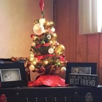A Strange Christmas